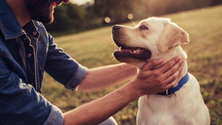 犬が飼い主に『大好きアピール』をしている時の仕草や行動4選
