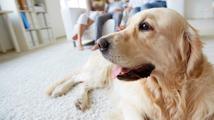 大型犬を室内で飼うために必要なこと3つ
