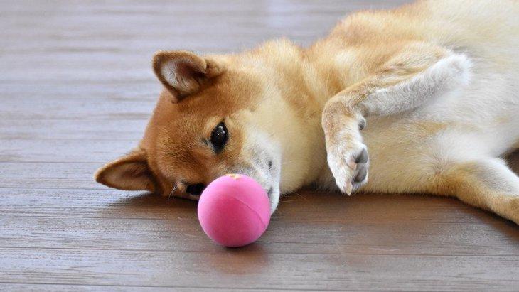 室内で簡単にできる!犬との『ボール遊び』2選