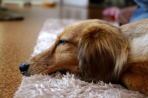 愛犬のしゃっくり・咳・震え・・・。隠れた病気のサインを見逃さないで!