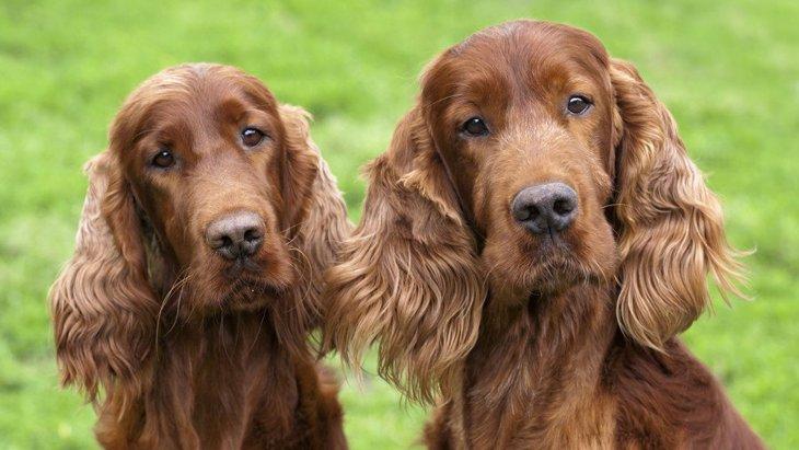 あなたと愛犬の相性はどう?良い・悪いを判断する方法3つ