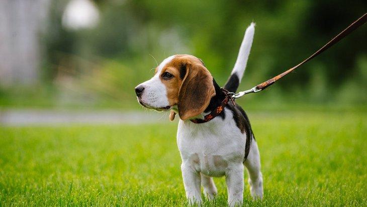 他人がよくする愛犬への迷惑行為2選!どう対応したらいい?