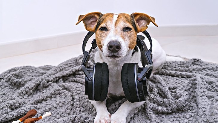 気を付けて!犬が驚いてしまう『音』7つ