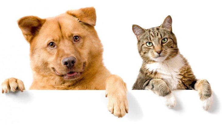 【やっぱり犬は飼い主が大好き!】犬は猫の5倍も愛情深いのです。