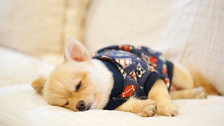 犬が胃酸過多になる原因や症状、対策まで