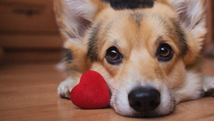愛犬からの『愛され度チェック』項目5選!あなたはどれくらい愛犬から想われてる?♡