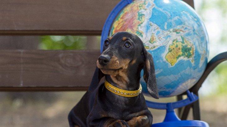 ペットが地球環境に影響を及ぼす?愛犬家として考えたいこと