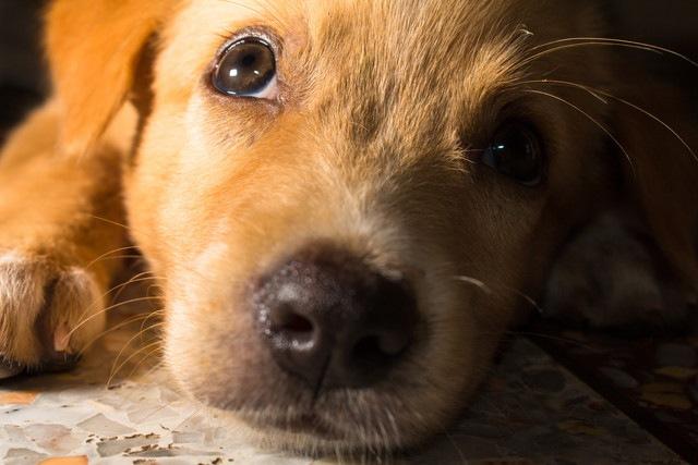 懐かれない人に試してほしい!犬との距離を縮める6つの方法