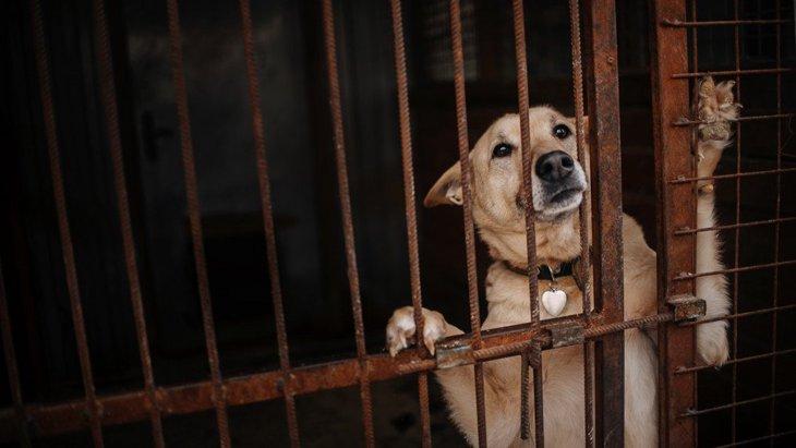 犬を捨ててしまう人たちが持っている『捨てる理由』3選