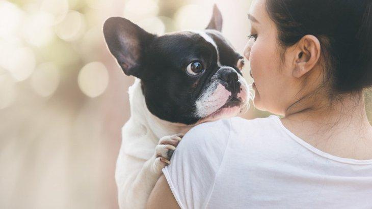 犬が上目遣いする時の気持ちとは?立っているか座っているかで意味が違う