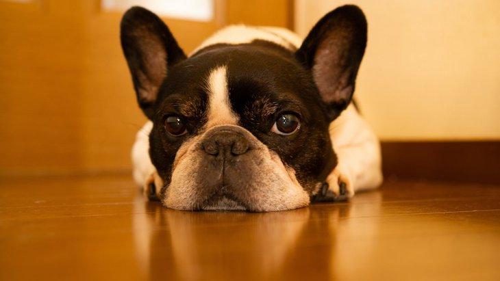 あなたの家は大丈夫?犬が病気になりやすい『NG環境』4選