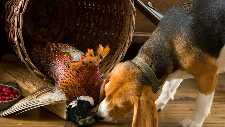 犬の得意を活かして能力を高める!『ノーズワーク』の遊び方を徹底解説