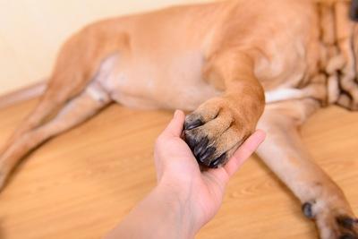 犬の足が腫れている!原因や考えられる病気
