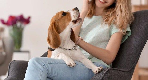 犬が電話中に吠えてしまう原因とは?どうやって吠えるのを止めるべき?