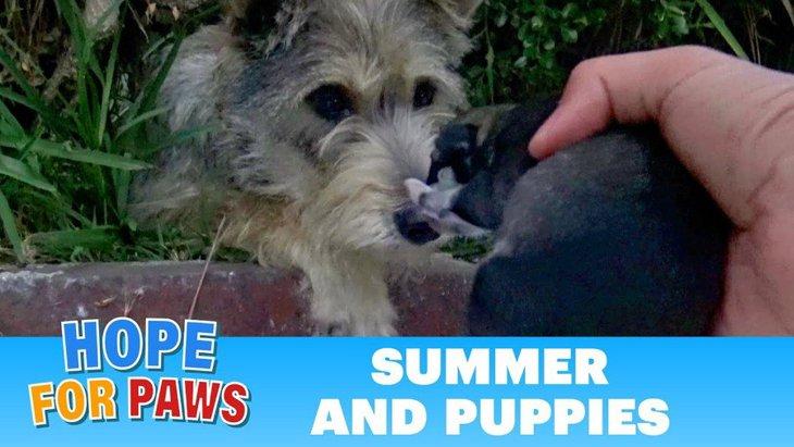 若い母犬と生まれたばかりの子犬たち。犬の信頼を人は裏切らない!