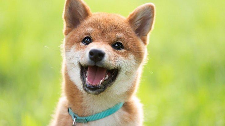 犬にも『性格の違い』がある!5つのタイプとそれぞれの接し方