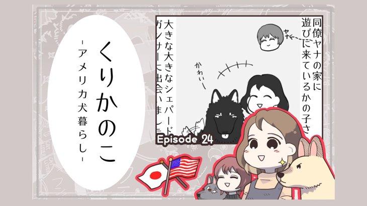 くりかのこ アメリカ犬暮らし【第24話】「シェパは楽しい」