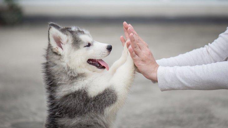 興奮犬にさせないために出来る4つのこと