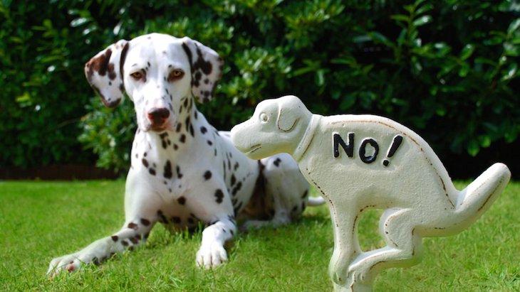 犬のウンチを放置する行為が減らない理由4つ