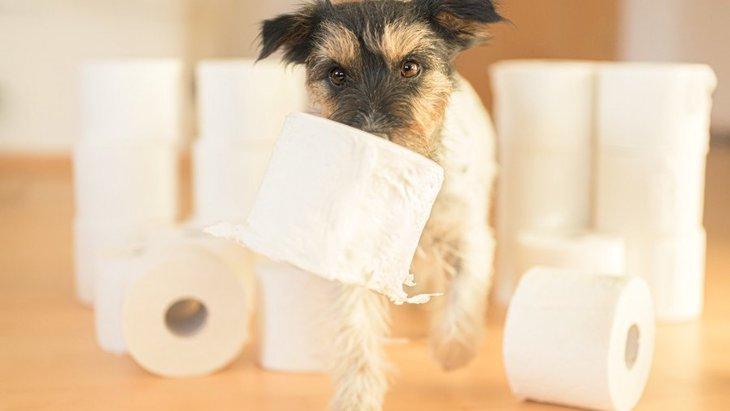 犬がトイレを我慢している時にする仕草や行動4選!正しい対処法まで解説