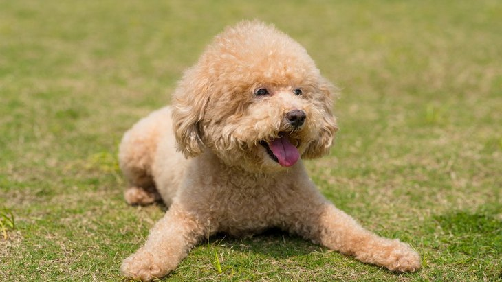 犬が『うれしょん』をしてしまう理由4つ!なおすための方法は?