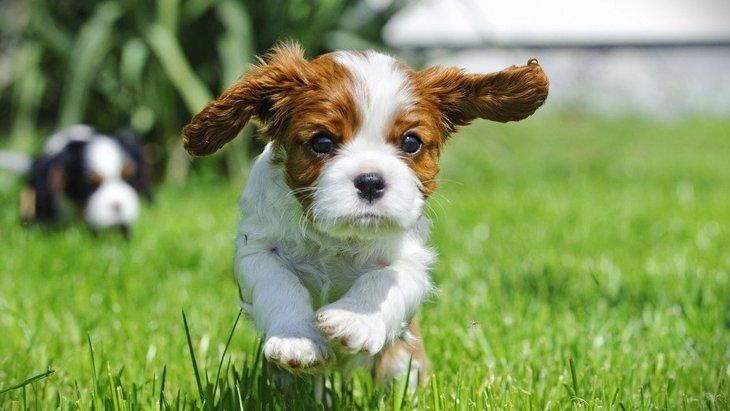 犬の飼い主が『他人に言われたくない言葉』ランキングワースト4