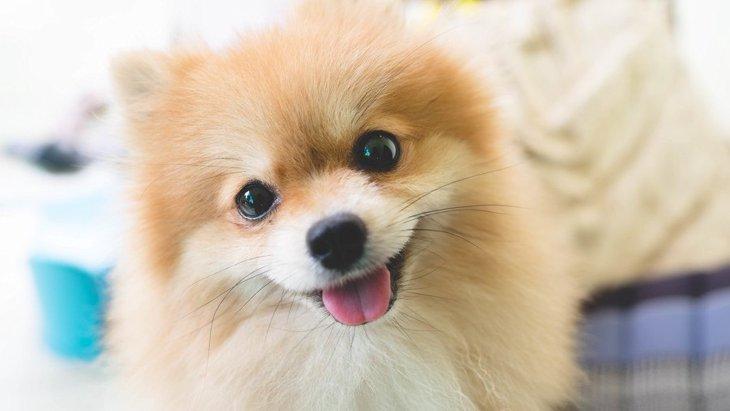 犬に警戒されてしまう3つの理由!好かれるコツは?