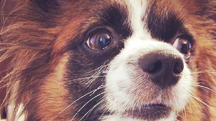 雷音などの不安から犬を守ってくれる『プレッシャーラップ』(まとめ)