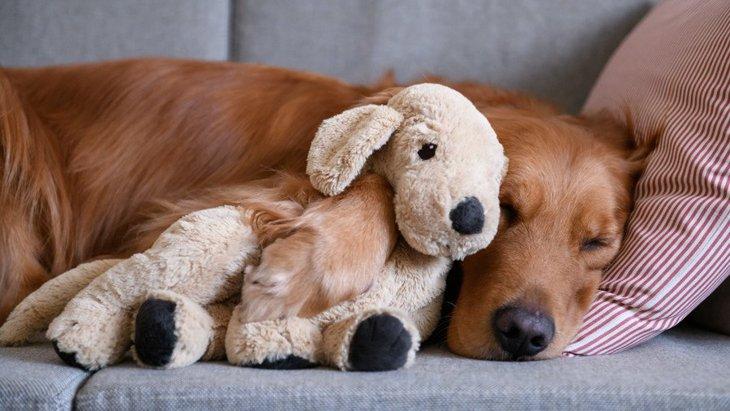 犬の『寝相』で心理がわかる?5つのパターンから紐解く愛犬の気持ち