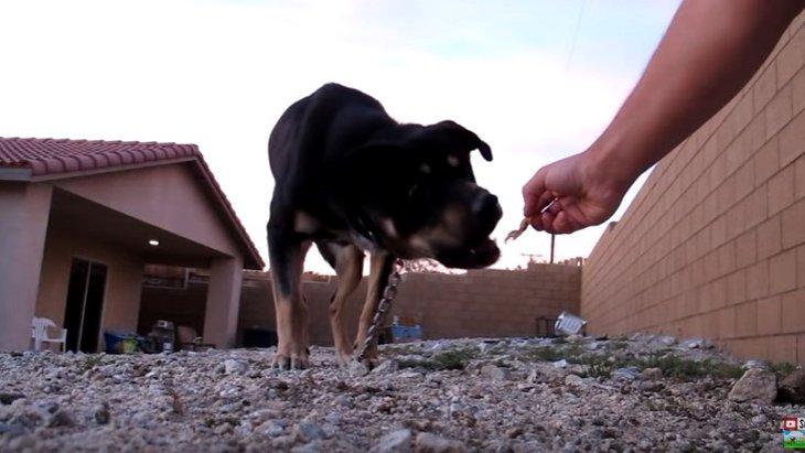 昼夜徹して連続3件の過酷な保護活動。全ては犬と飼い主の笑顔のため!