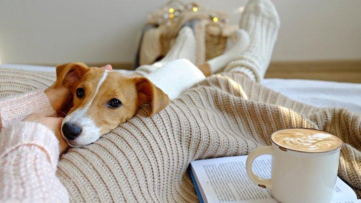 こんな経験ない?犬が人に『気を使っている』時に見せる仕草や行動5選