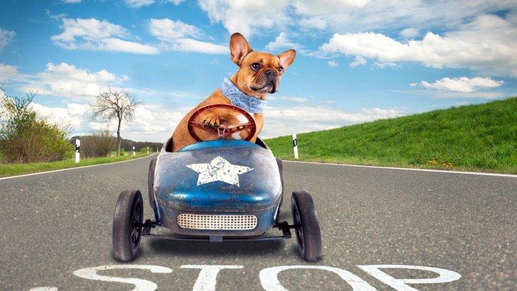 犬とサービスエリアに立ち寄るときの3つの注意点