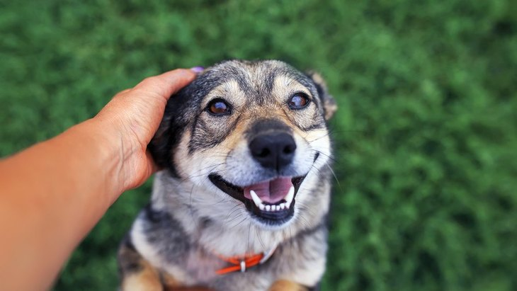 犬は飼い主以外に撫でられるとストレスを感じる?嫌な時にする仕草は?