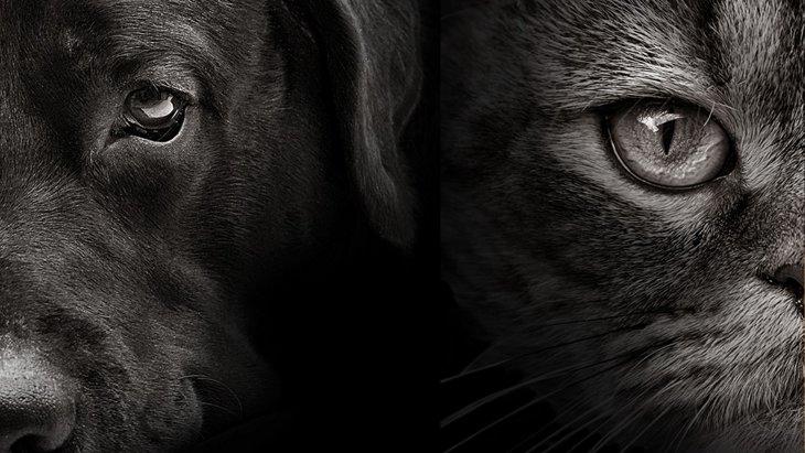 《犬屋敷・猫屋敷の悲劇》過剰多頭飼育で犠牲になる動物たち