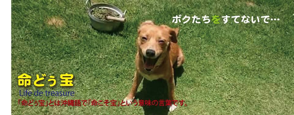 沖縄★止らない迷い犬達の収容 必死の救出活動&里親探し…『命どぅ宝』