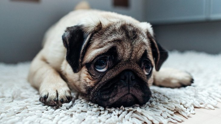 犬が恐れている『3つの行為』