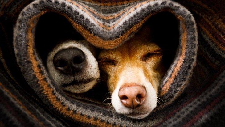 秋に注意すべき『犬への危険なこと』3選