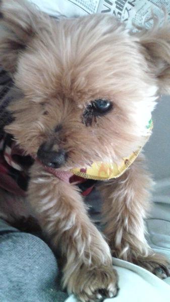 愛犬介護の基礎知識。後悔したくない人のために