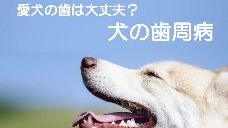 【獣医師解説】3歳以上のわんちゃんの○割が歯周病に!?