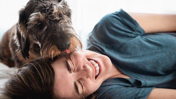 犬が『飼い主を舐めてくる』時の心理5選!良い意味と悪い意味があるって本当?