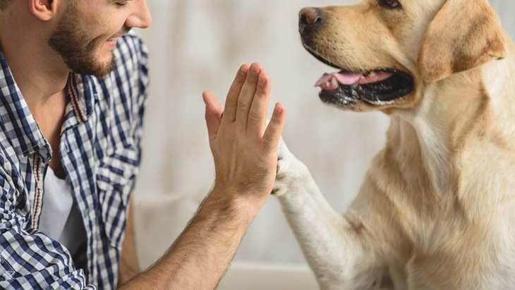 犬との絆を深める4つの方法
