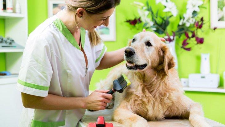 犬の美容院の選び方!9つのチェックポイント