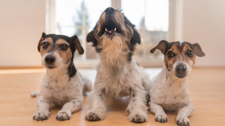 犬の本音がわかる『4つの仕草』
