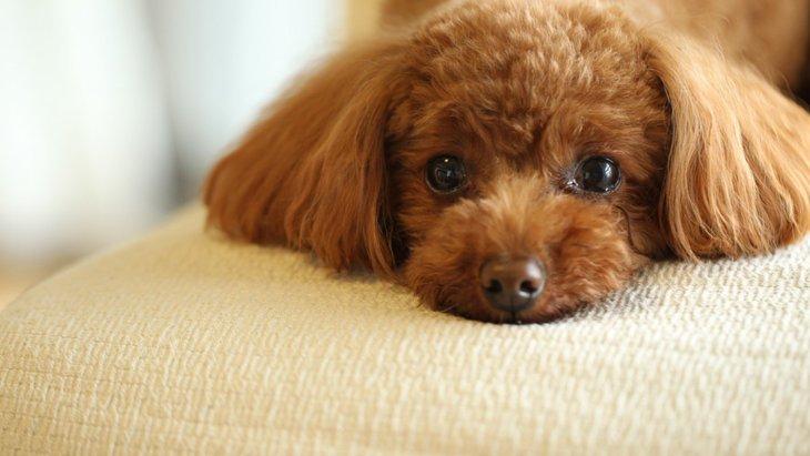 愛犬が急におとなしくなるのはどうして?
