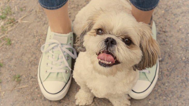 犬が人間の股に潜り込んでくる理由とは?