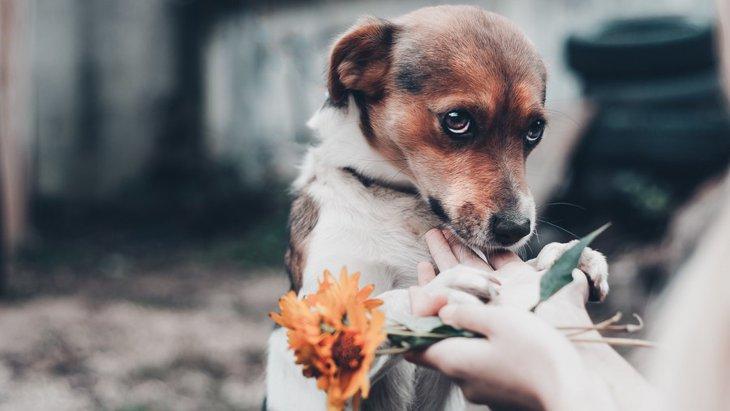 犬が不安や恐怖を感じているときに見せる9つの仕草や行動