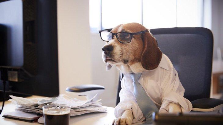 犬に人間用の栄養ドリンクを飲ませても大丈夫?
