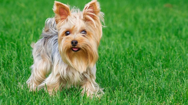 『肥満になりやすい』犬種5選!暮らすうえで必ず意識すべきことや太らせないコツとは