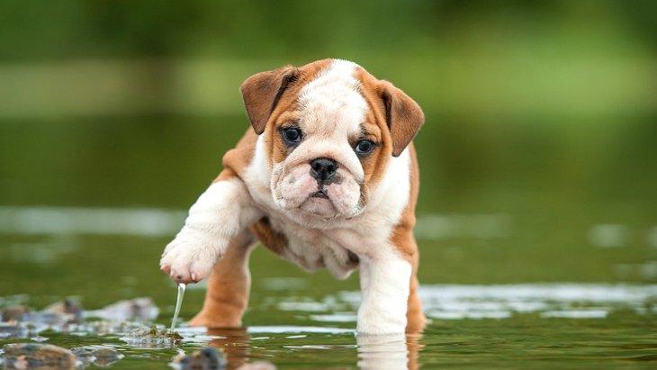 犬が『水』や『お湯』を嫌がる時の心理3つ