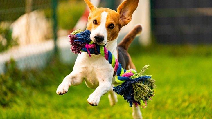 犬のテンションが高い時にしない方が良い3つのこと